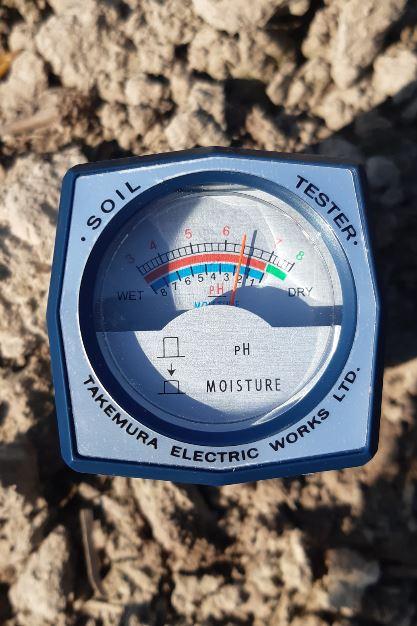 Czywiesz jakie pH gleby jest najbardziej odpowiednie dla buraków?