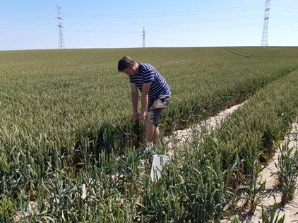 Jak prawidłowo pobrać próbkę gleby doanalizy ?